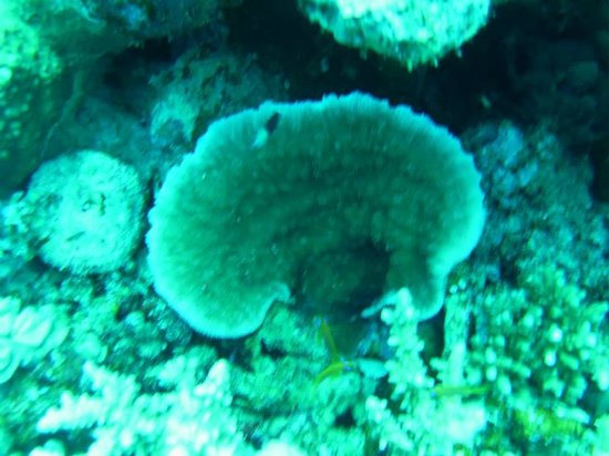 """Big Blue Dahab : Our guide Mohab took this picture while we were diving at """"Caves"""""""