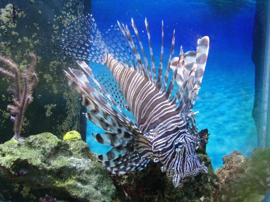 Florida Keys Eco-Discovery Center: Lion fish