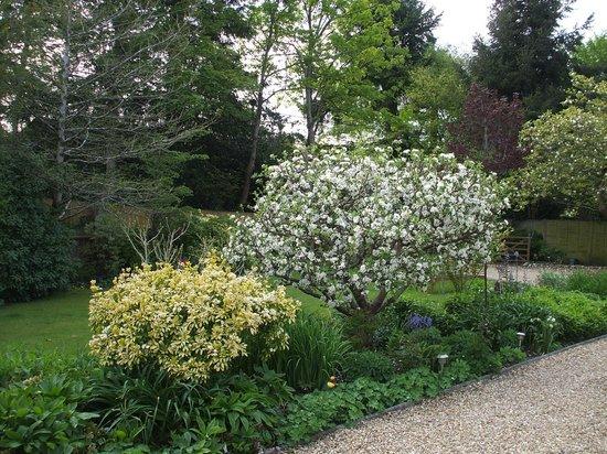 Wayside Cottage: Apple blossom