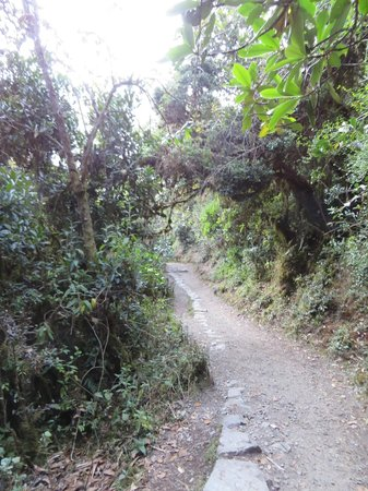 Camino Inca: The trail
