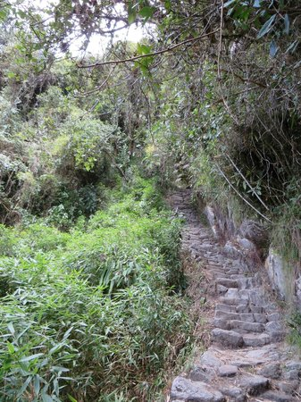 Camino Inca: Into the jungle