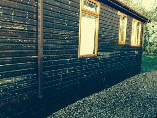 Athelington Hall Log Cabin Holidays: Tatty appearance of ash