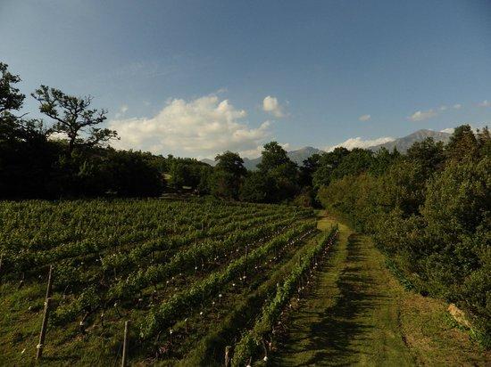 Boekenhoutskloof Winery: Boekenhoutskloof vines