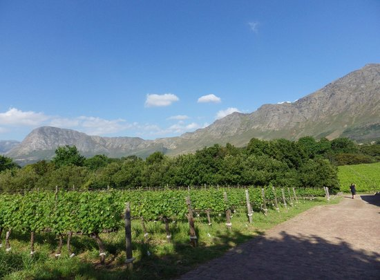 Boekenhoutskloof Winery: View across the Boekenhoutskloof vines to the Hottentots-Holland Mountain
