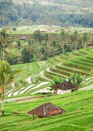 Villa Kaba Kaba Resort Bali: Bali Rice Paddies