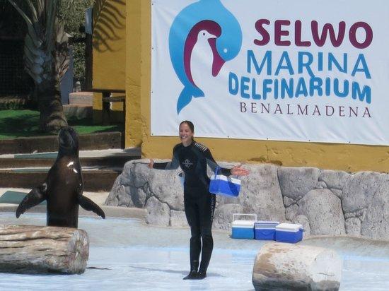 Selwo Marina: шоу дельфинов