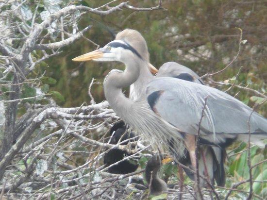 Arthur R. Marshall Loxahatchee National Wildlife Refuge: birds in Loxahatchee