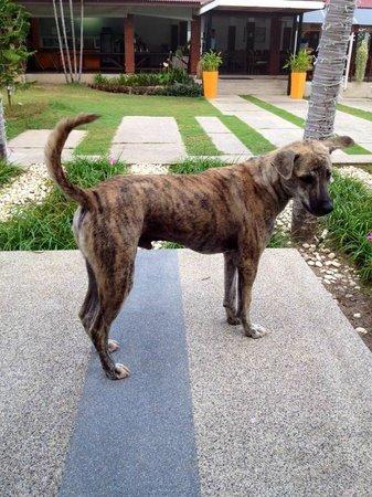Centra by Centara Coconut Beach Resort Samui: The friendly dog!!