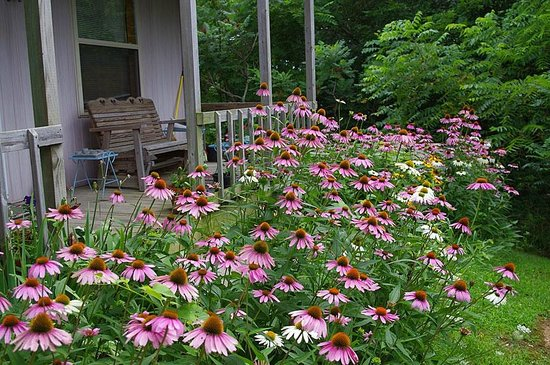 Cottage on the Knoll at Cedarcroft Farm: The porch, with coneflowers