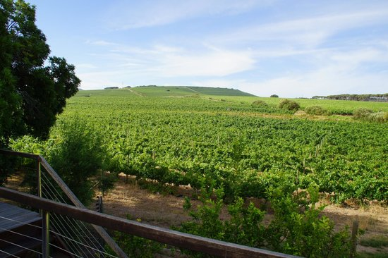 Lovane Boutique Wine Estate and Guest House: Blich aus den Luxury-Rooms