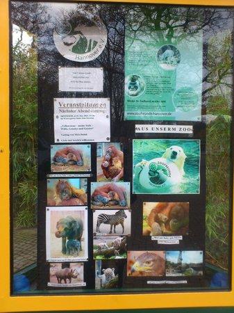 Erlebnis-Zoo Hannover: Zoo