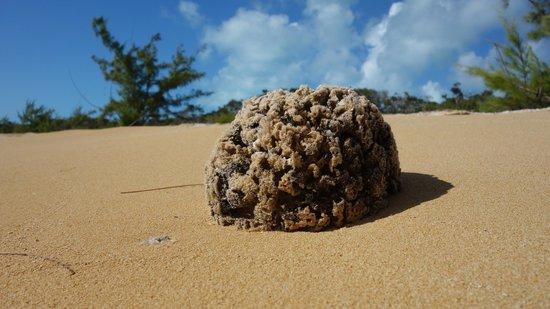 Chez Pierre Bahamas: Sponges drifts