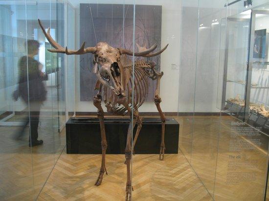 Musée national : Scheletro