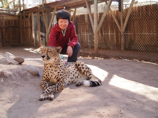 Cango Wildlife Ranch : Touch a cheetah for an extra 200 rand.