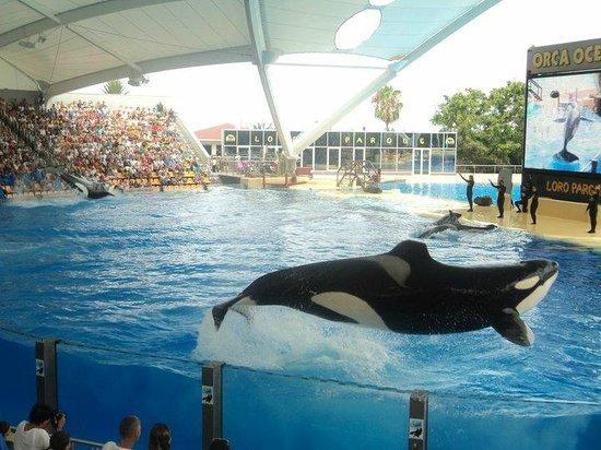 Loro Parque : orca wet zone