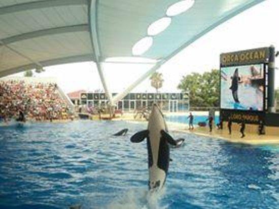 Loro Parque : orca rise