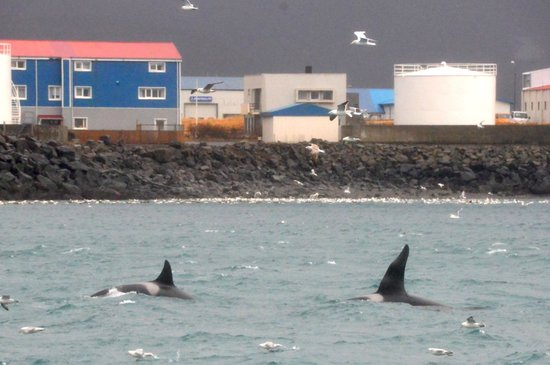 Hotel Framnes: Orcas with hotel in background