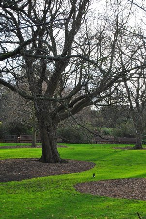 Royal Botanic Garden Edinburgh: Il Parco