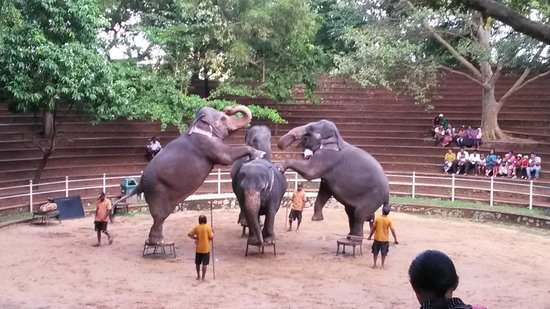 National Zoological Gardens of Sri Lanka: elephant show