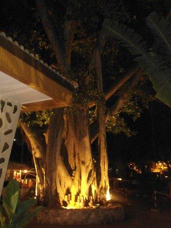 Basaya Beach Hotel & Resort: Деревце перед входом в отель