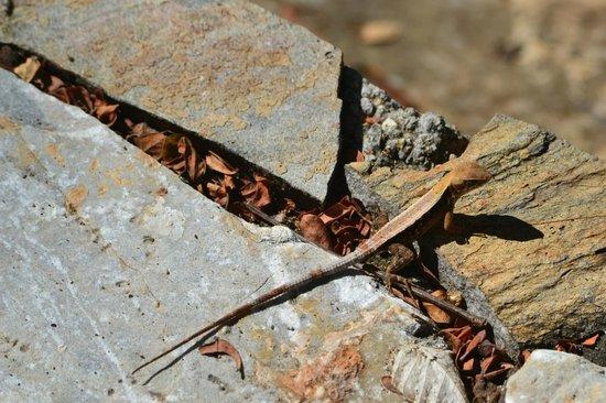 Copalita Ecological Park & Ruins : Lizard