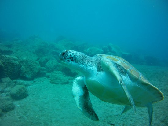 Centro de buceo Zero Gravity: Jacks first encounter with a Turtle