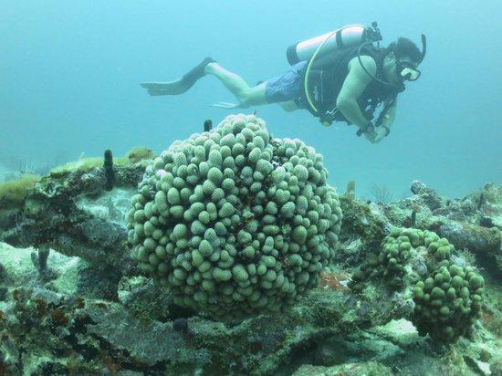 Vigilant Divers Anguilla: Enjoyment!