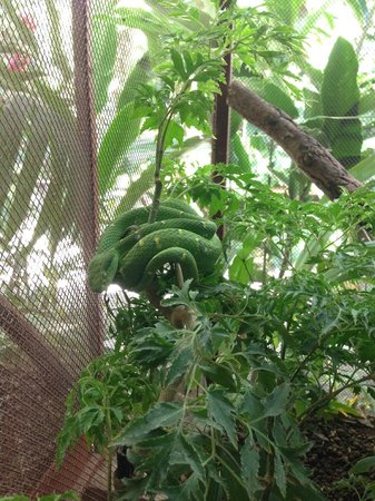 Fundación Jaguar Rescue Center: Snake