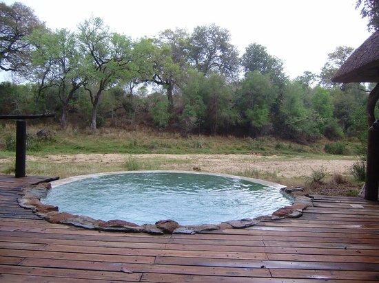 Dulini Lodge : Plunge Pool