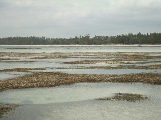 Diani Beach: barriera corallina