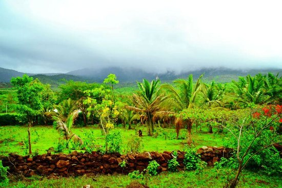 Joe's Homestay : VIEW FROM HOME STAY
