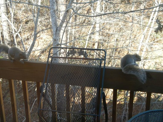 Fox Run Resort : Look past the Squirrels on the deck railing!