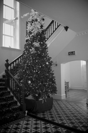 Wildercombe House: The Christmas Tree Again