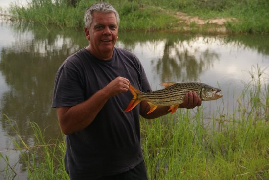 Kubu Cabins: My husband caught a tiger from the side