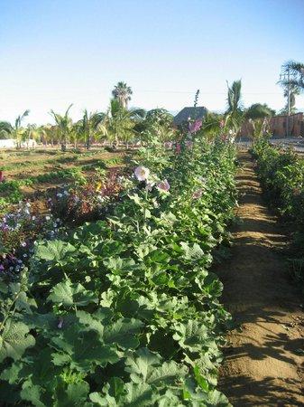 Rancho Pescadero: The garden