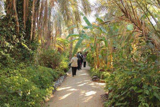 The Garden Picture Of Eden Palm Tresors De L 39 Oasis