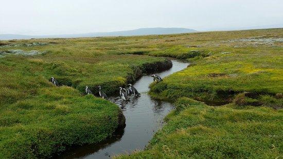 Otway Sound & Penguin Reserve: .