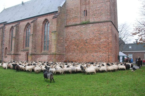 Jacobuskerk: A herd of sheep surrounding the church
