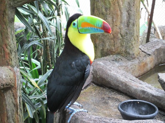 La Paz Waterfall Gardens: Hold a toucan!