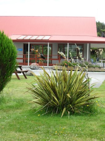 Franz Josef TOP 10 Holiday Park : Tui on bush in front of dining room / kitchen