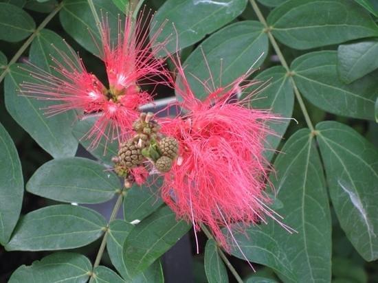Naples Botanical Garden : botanical garden By catherine gilles