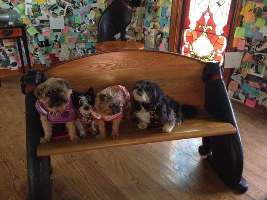 Dog Mountain : My dogs sitting in the pews