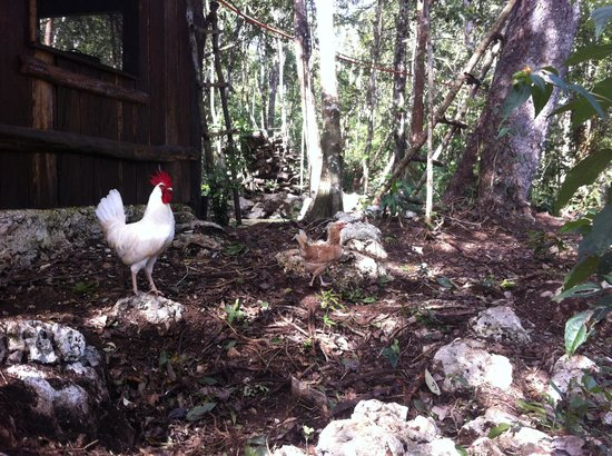 Quintana Roo National Park Campground & Hiking : alpha male