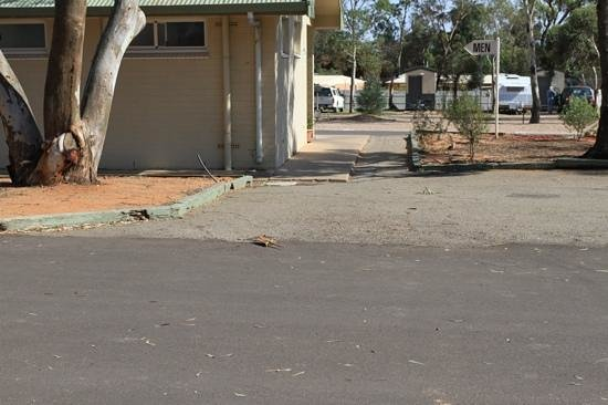 Discovery Parks – Port Augusta: If you look carefully, the visitor heading to the amenities.