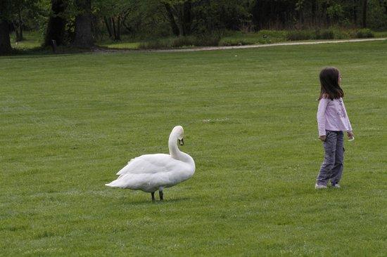 Parc du Chateau de Vizille : Huge Swan