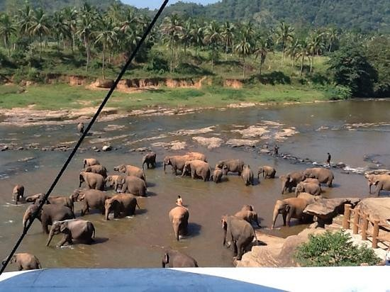 Kuoni Ceylon Tour: Elephant ophanage