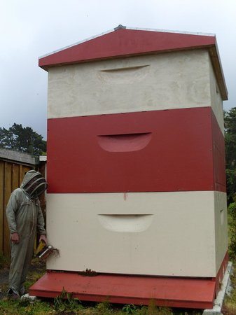 Bay of Islands Honey Shop: The biggest beehive!