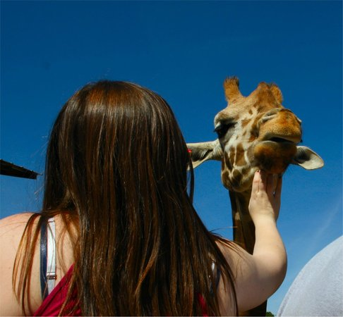 The Lazy 5 Ranch: Petting a giraffe at Lazy 5 Ranch