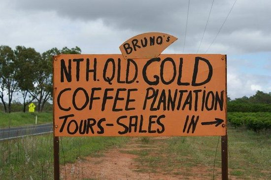 North Queensland Gold Coffee Plantation