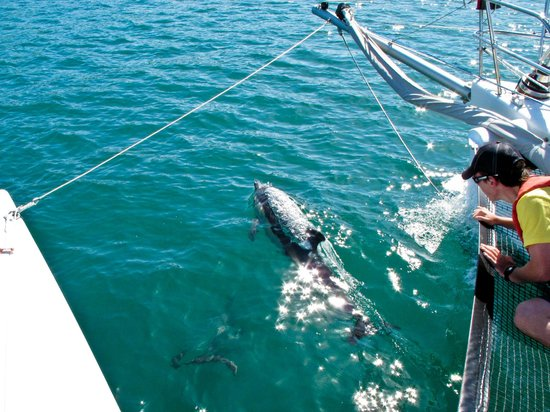 Tri Sail Charters: Dolphin encounter on Trisail Charters